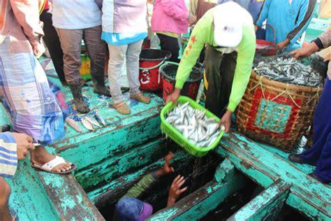 Ikan Keranjang Bali kisah dua ikan perebutan sarden di selat bali bagian 2