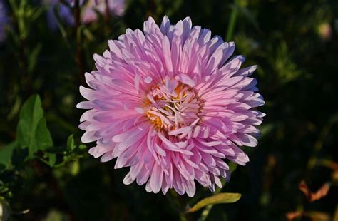 jenis bunga tercantik  dunia terlengkap gambar