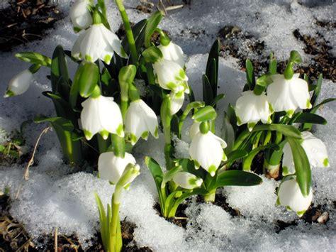 fiori bucaneve parco nazionale appennino tosco emiliano iniziative ed