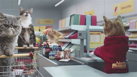 Grocery Store Meme - meme cats go grocery shopping in german commercial viral