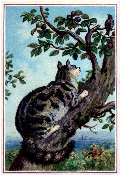 in tree vintage cat in tree image with bird the graphics