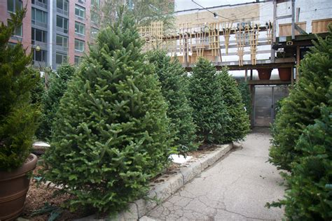 wwwhouston garden center xmas tree sale it s trees time hell s kitsch