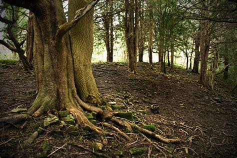 woodland tree woodland related keywords woodland keywords