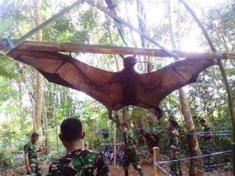 volpe volante australiana human size bat in peru philippines hoax ufo