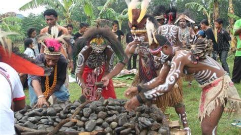 upacara bakar batu  papua unik  menarik