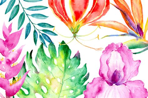 lush blooms floral watercolour collection books watercolor clipart tropical collection by cornercroft