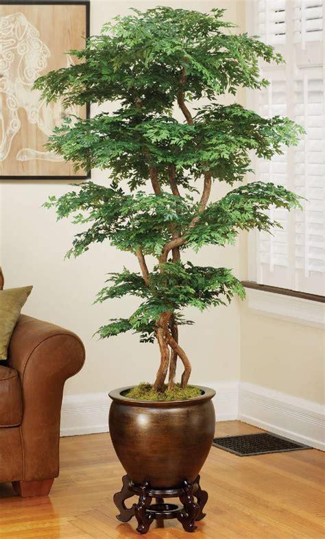 plantas interior 24 plantas perfeitas para decorar o interior da sua casa