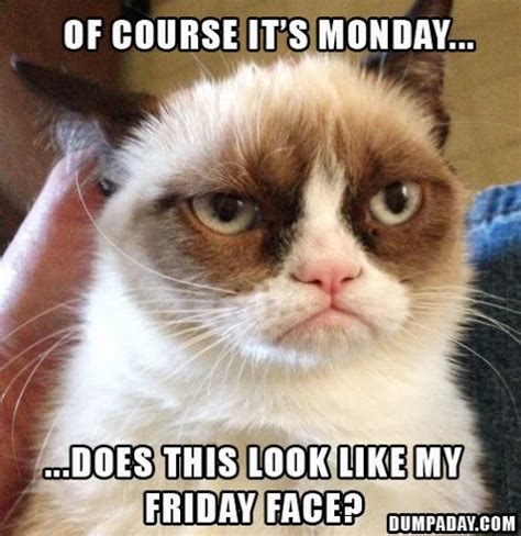 Grumpy Cat Friday Meme - 136 best images about days of the week on pinterest
