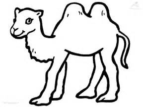 camel coloring sheet camel coloring page