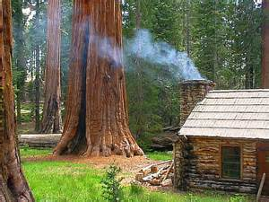 house of the day redwood forest cabin