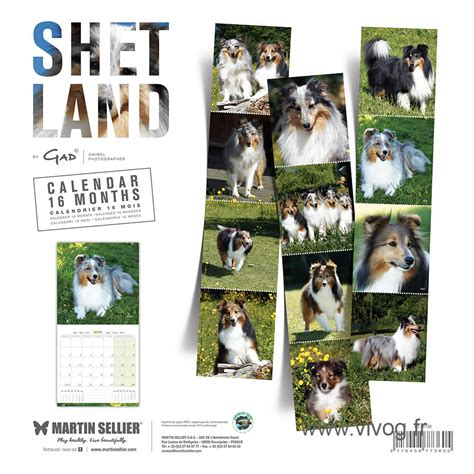 Calendrier Martin Sellier Race Shetland Calendrier Chien 2018 Martin Sellier