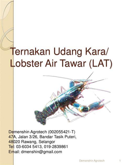 Benih Udang Lobster Air Tawar cara ternak udang kara lobster air tawar lat di 017 2839861