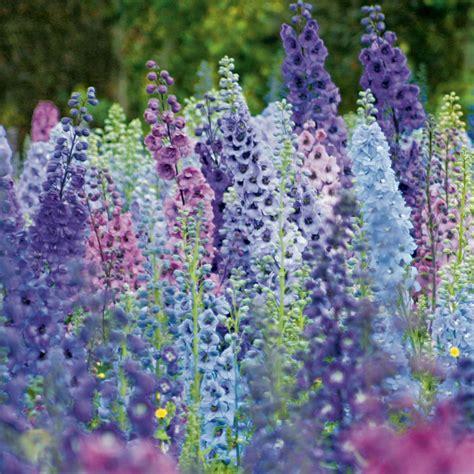 Bed Cover Rumbai Summer Flower Import o noua afacere ideala pentru suprafete mici cultivarea