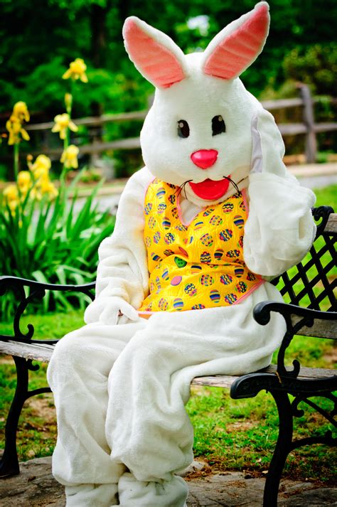 easter bunny if the easter bunny stopped at uva