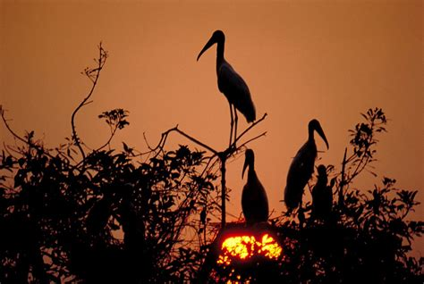 ladario in inglese artigo sobre o pantanal brasileiro na imprensa