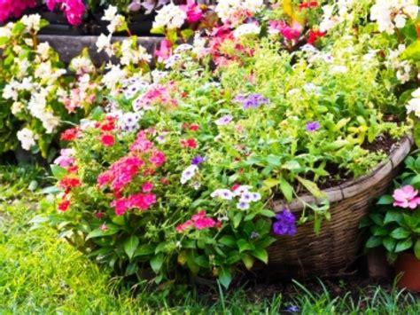 flori de flori de toamnă florile sf 226 rştiului de august