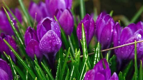 Purple Garden Flowers Purple Garden Flowers 4155794 2880x1800 All For Desktop