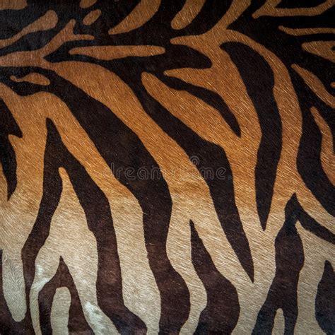zebra pattern repeat abstract print animal seamless pattern zebra tiger