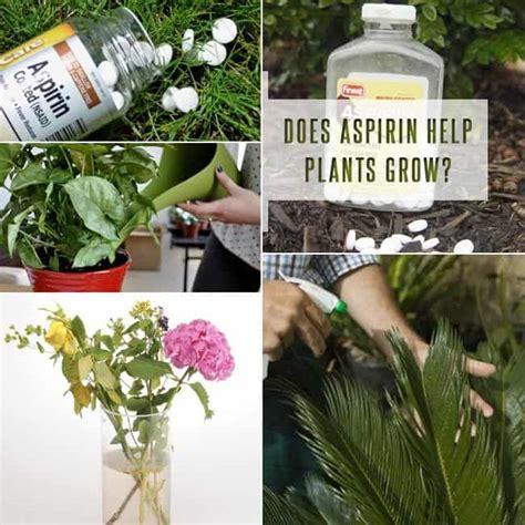 does aspirin help plants grow aspirin uses in garden for