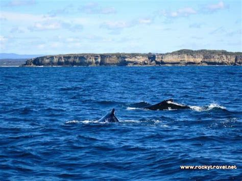boat tour jervis bay the natural beauty of jervis bay