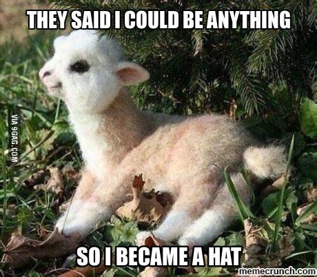 Alpaca Meme Generator - baby alpaca