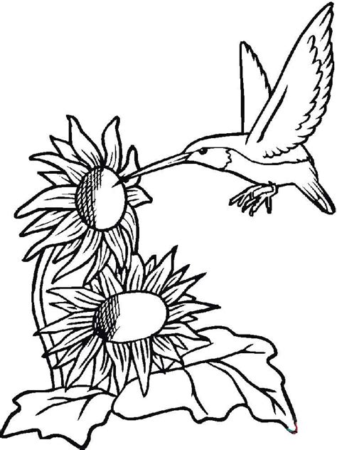 coloring pages with hummingbirds hummingbird coloring pages download and print hummingbird