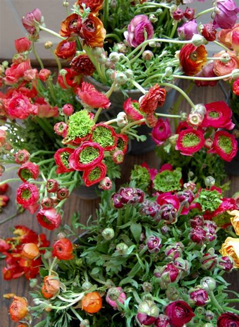 san francisco flower garden show we like it san francisco flower garden show