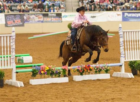 pin  etrc horse shows  obstacles  images horse