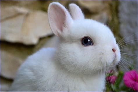 coniglio testa di nano coniglio testa di idee green
