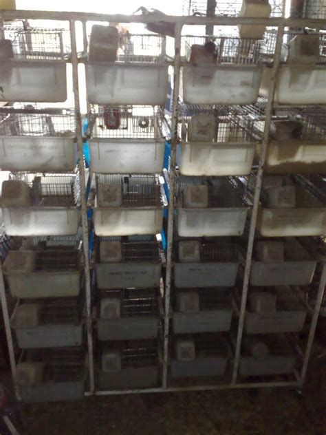 rat racks for sale related keywords rat racks for sale