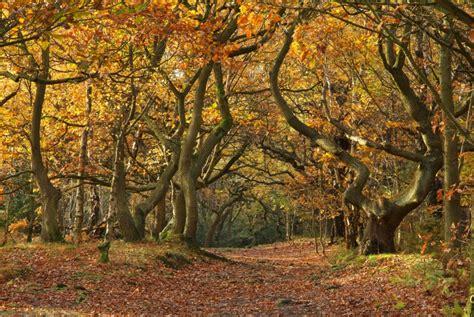 woodland tree huddersfield autumn paths trees and