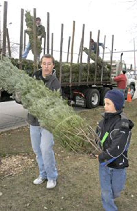 osh fresh christmas trees the compass newspaper december 5 2008 issue news