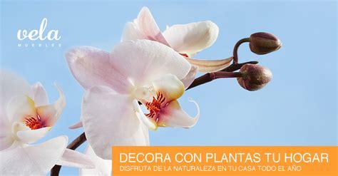 decora con plantas de interior como decorar tu casa con plantas de interior vela muebles