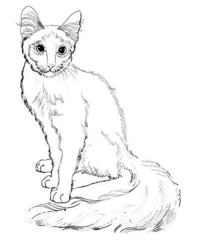 favorite cat colouring pages images  pinterest