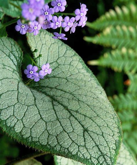 best 25 small purple flowers ideas on pinterest purple plants tall purple flowers and purple