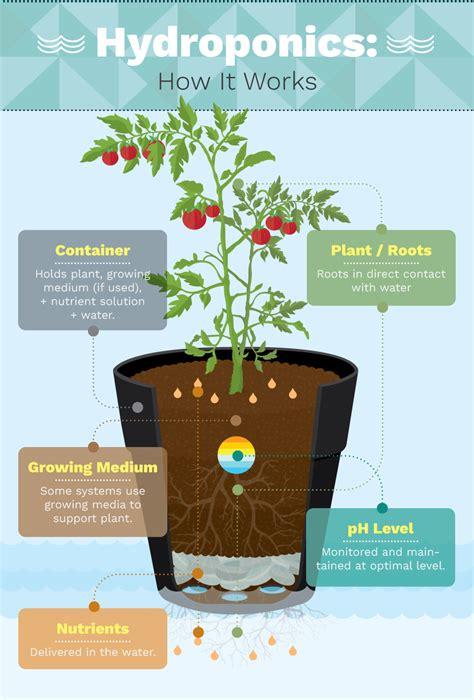 growing food indoors  hydroponic gardening