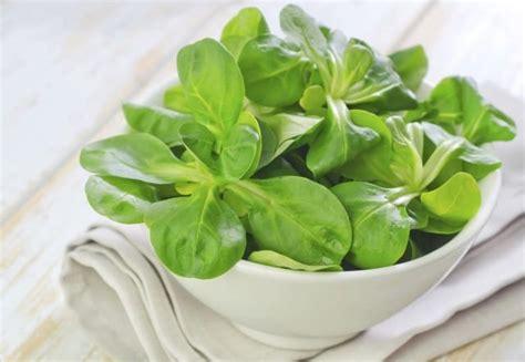 coltivare in vaso come coltivare la valeriana in vaso o nell orto non sprecare