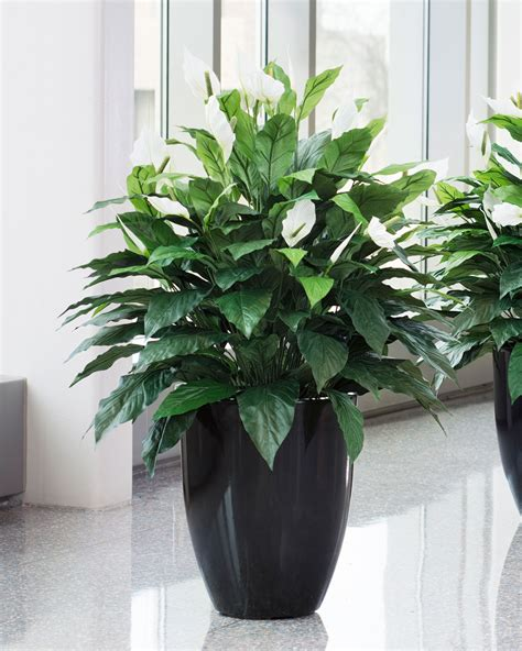 silk plants lifelike double full spathiphyllum silk floor plant at petals