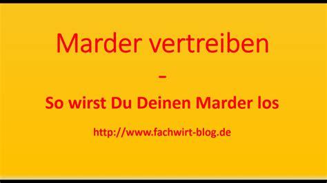 Wie Vertreibt Einen Marder 1884 by Marder Vertreiben Dachboden Swalif