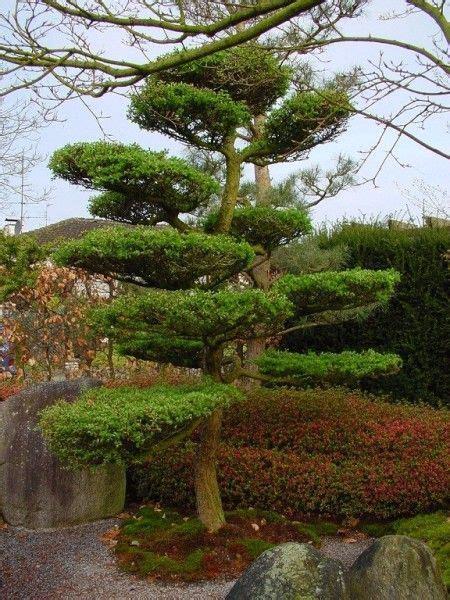 rechen japan garten vorgarten kiefer search vorgarten