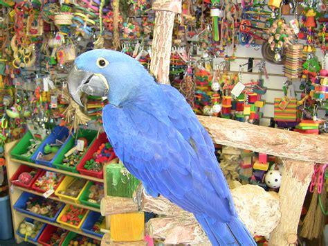 garden bird supplies wholesale quality