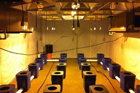 hydroponic grow room current hydroponics by current culture cch2o grozinegrozine