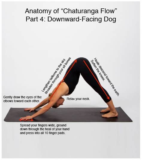 boat pose anatomy 17 best images about yoga on pinterest pilates workout