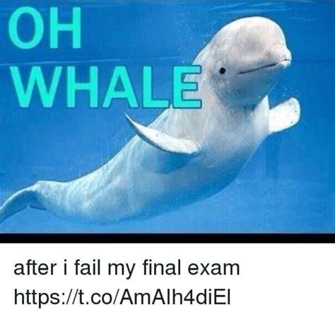 Oh Whale Meme - oh whale after i fail my final exam httpstcoamaih4diel