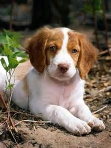 Puppies pets best dogs dog breeds babies dog art i want keep calm and