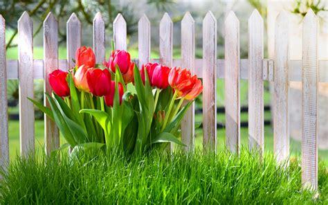 1440x900 kr best wallpaper net 봄 꽃 빨간 튤립 정원 잔디 배경 화면 1440x900 배경 화면 다운로드 kr best