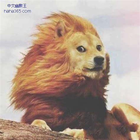 Make A Doge Meme - 传说中的大风把我吹成一条狗 搞笑图片 中文幽默王