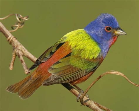 Birdathon Audubon New Mexico