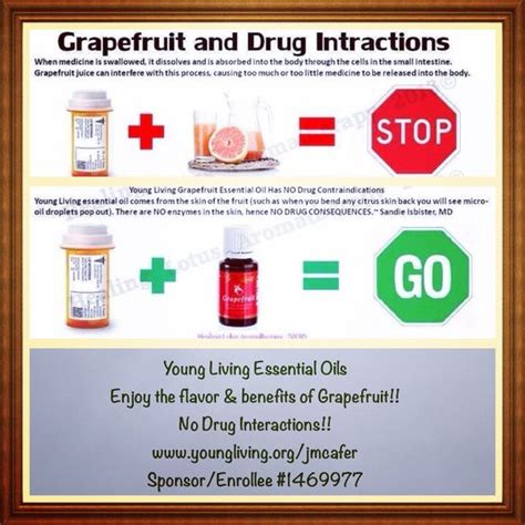 Grapefruit Detox To Clean Medications by Grapefruit And Medication Living Essential Oils