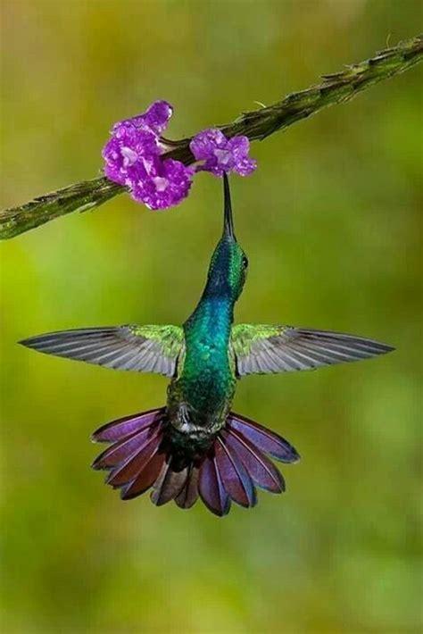 hummingbird colors hummingbirds such pinterest